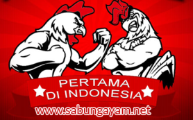 www.sabungayam.net Website Alternatif Sabung Ayam