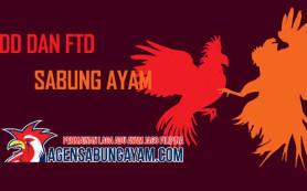 Apa Itu BDD dan FTD Dalam Peraturan Sabung Ayam S128