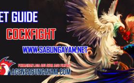Bet Guide Cockfight Online di Agen Sabung Ayam Online