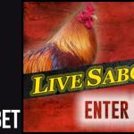 Freebet Sabung Ayam Online Gratis di Agen Sabung Ayam