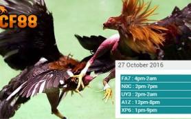 jadwal-sambung-ayam-cf88my-27-oktober-2016