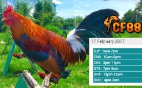 Jadwal Tarung Adu Ayam CF88PH 17 Februari 2017