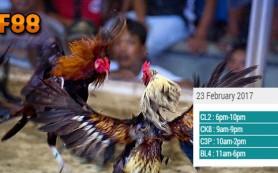 Jadwal Terbaru Sabung Ayam CF88 23 Februari 2017