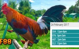 Prediksi Jadwal Sabung Ayam CF88MY 24 Februari 2017