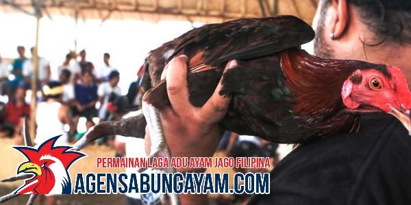 Agen Sabung Ayam Online Republik Demokratik Kongo