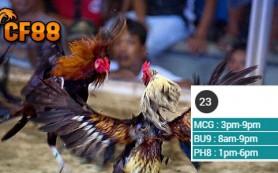 Prediksi-Jadwal-Sabung-Ayam-CF88MY-23-Maret-2017
