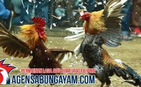 Agen Sabung Ayam Filipina