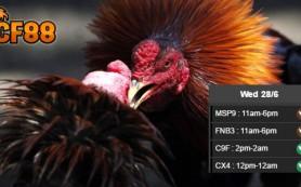 Jadwal-Sabung-Ayam-CF88VN-28-Juni-2017