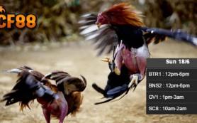 Jadwal-Taruhan-Sabung-Ayam-CF88TH-18-Juni-2017