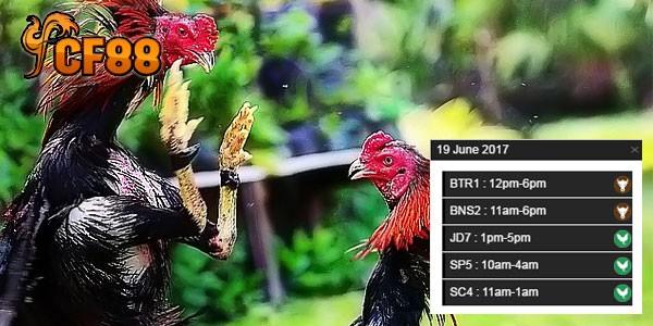 Jadwal-Terbaru-Sabung-Ayam-CF88-19-Juni-2017