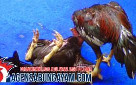 Agen S128 Sabung Ayam Korea Selatan