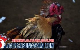 Agen S12888 Sabung Ayam Korea Utara