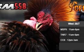 Jadwal Ayam CF88ID 26 Juli 2017