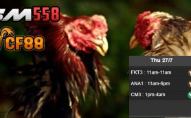 Jadwal Sabung Ayam CF88VN 27 Juli 2017