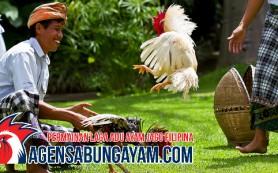 Agen Sabung Ayam CF88 Maladewa