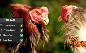 Jadwal-Terbaru-Sabung-Ayam-CF88-17-Agustus-2017