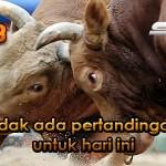Jadwal Arena Adu Banteng CF88TH 21 Agustus 2017
