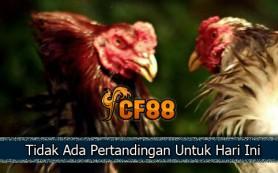 Jadwal-Cockpit-Sabung-Ayam-CF88INDO-21-September-2017