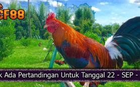 Jadwal-Sabong-Ayam-CF88KR-22-September-2017