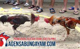 Taruhan Sabung Ayam Venezuela