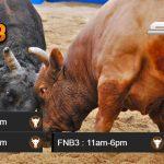 Jadwal Bullfight Terupdate CF88VN16 Desember 2017