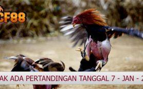 Jadwal Laga Ayam CF88SG 7 Januari 2018