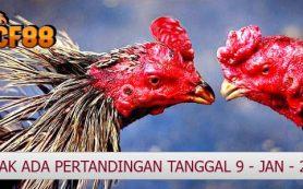 Jadwal Pertandingan Ayam CF88INDO 9 Januari 2018