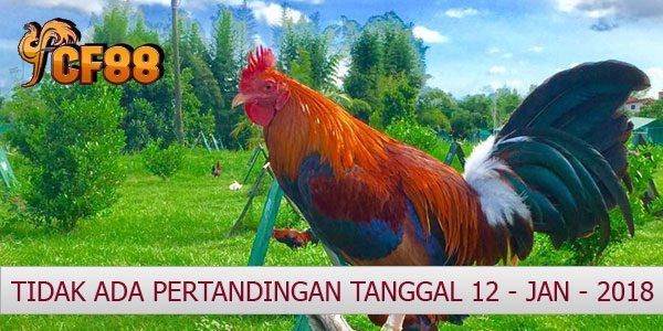 Jadwal Resmi Adu Ayam CF88VN 12 Januari 2018