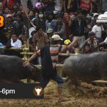 Jadwal Judi Adu Banteng Online CF88KR 15 Januari 2018