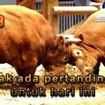 Jadwal Resmi Laga Banteng CF88ID16 Januari 2018