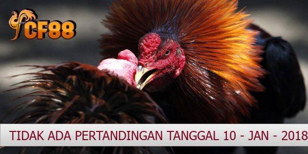 Jadwal Resmi Sabung Ayam CF88KR 10 Januari 2018