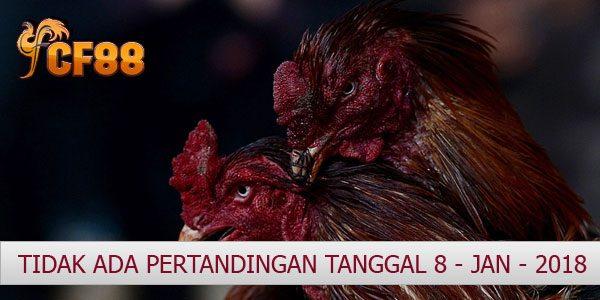 Jadwal Judi Ayam CF88PH 8 Januari 2018