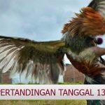 Jadwal Judi Sabung Ayam CF88TH 13 Januari 2018