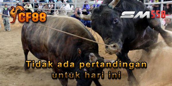 Jadwal Judi Adu Banteng Online CF88KR 14 Februari 2018