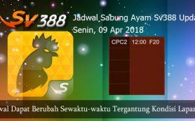 Jadwal Resmi Adu Ayam SV388 09 April 2018