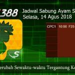 Jadwal Live Sabung Ayam SV388 14 Agustus 2018