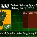 Jadwal Terbaru Sabung Ayam SV388 16 Oktober 2018