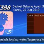 Jadwal Sabung Ayam Update SV388 22 Juni 2019
