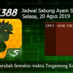 Jadwal Sabung Ayam Update SV388 20 Agustus 2019