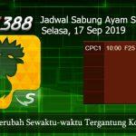 Jadwal Terbaru Sabung Ayam SV388 17 September 2019