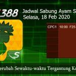 Jadwal Tarung Cockfight SV388 18 Februari 2020