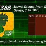 Jadwal Judi Sabung Ayam SV388 7 Juli 2020