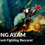 Situsnya Bos Sabung Ayam Online Indonesia