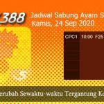 Jadwal Ayam SV388 24 September 2020