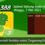 Jadwal Pertandingan Ayam SV388 7 Maret 2021