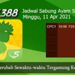 Jadwal Resmi Cockfight SV388 11 April 2021