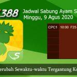 Jadwal Resmi Laga Ayam SV388 9 Agustus 2020