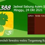 Jadwal Sabung Ayam SV388 24 Oktober 2021